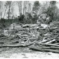 Tree Damage from 1953 Tornado