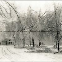 Tree Damage Caused by Ice Storm, 1921